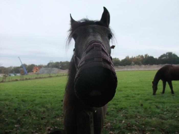 horsebag