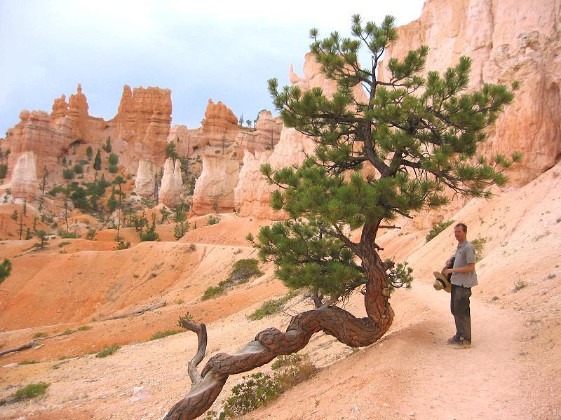 brycetree
