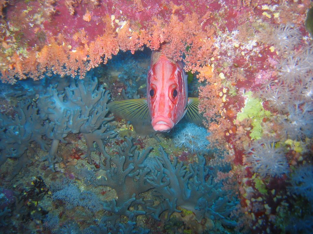 sqfish